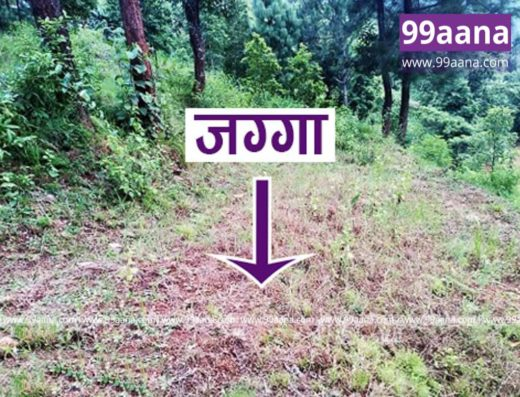land for sale at Panchthar