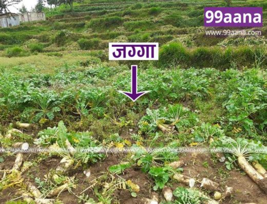 Land for sale at Thaha, Palung, Makwanpur