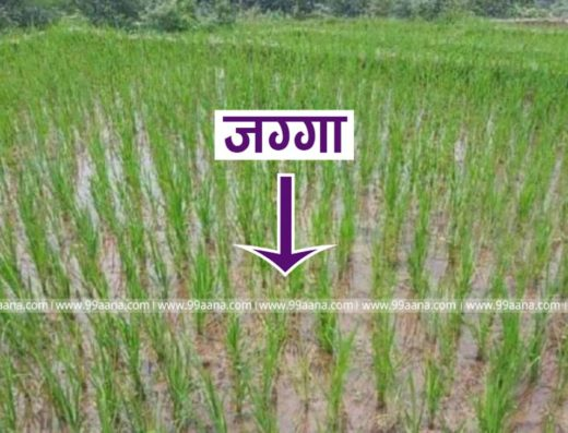 Land for Sale at Dhunibesi, Dhading